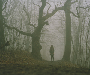 forest, alone, and tree image