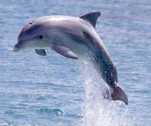 animal, sea, and dolphin image