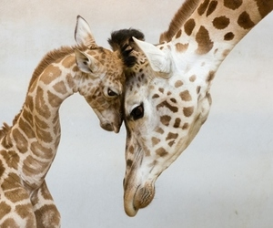 animals, giraff, and puppy image