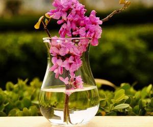 flowers, morning, and fushia image