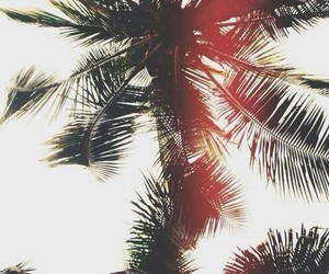 summer, palm trees, and sun image