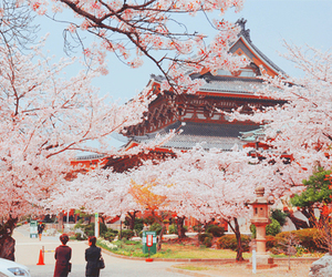 japan, flowers, and photography image