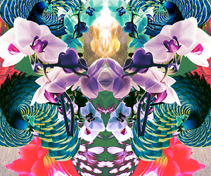 cool, tumblr, and floral image