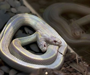 snake, animal, and silver image