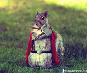 thor, animal, and squirrel image