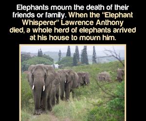 amazing, elephant, and fact image