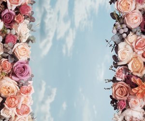 background, flower, and hd image