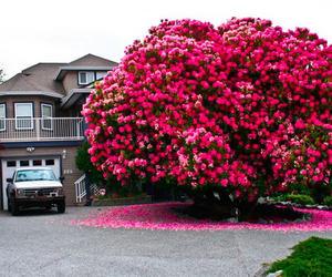 tree, pink, and flowers image