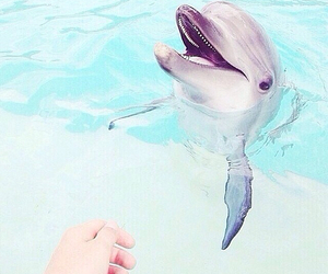 dolphin, want, and love image