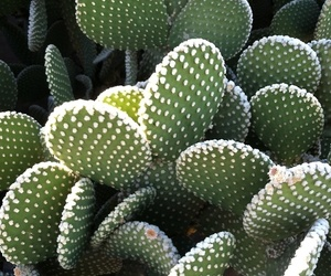 theme, cactus, and plants image