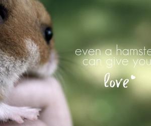 animal, hamster, and love image