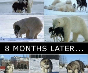 funny, friends, and husky image