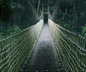 bridge, forest, and green image