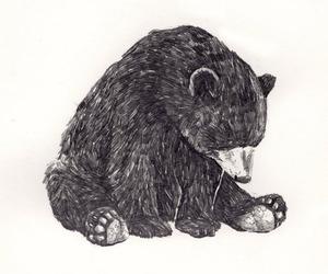 bear, drawing, and art image