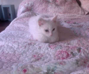 cat, pale, and pink image