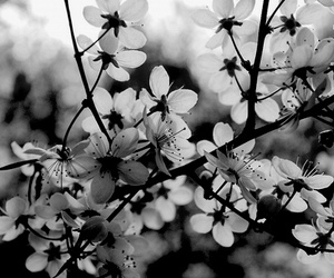 black and white, vintage, and flowers image