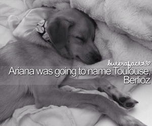 dog, Toulouse, and tumblr image