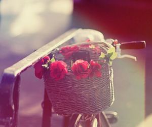 bike, hipster, and rose image