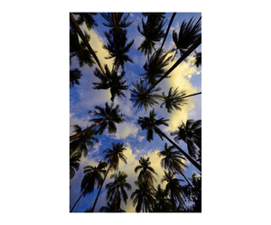 grunge, indie, and palm trees image