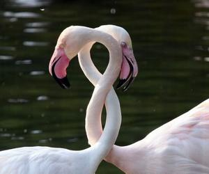 love, flamingo, and feelings image