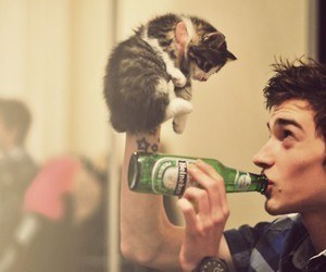 cat, boy, and beer image