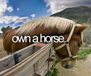 before i die, horse, and bucket list image