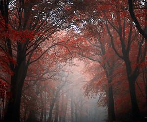 beautiful, foggy, and trees image