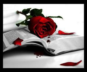 beautiful, bible, and rose image