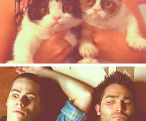 sterek, teen wolf, and cat image