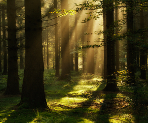 woods, nature, and trees image