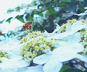 animal, bee, and flowers image