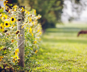 sunflower, horse, and flowers image