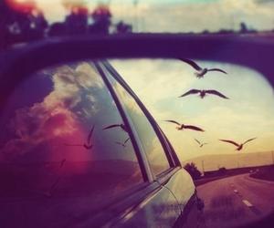 birds, dreams, and live image