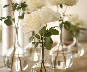 rose, beautiful, and flowers image
