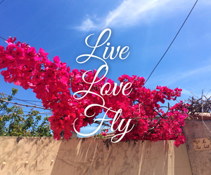flowers, fly, and love image