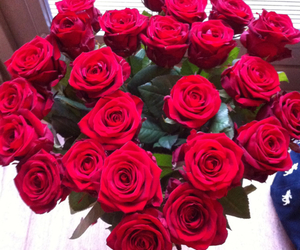 rose, red, and love image
