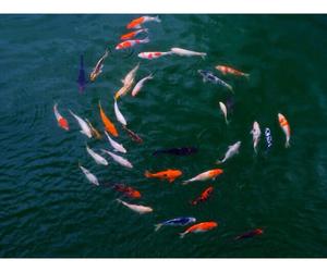 fish and nature image
