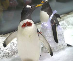pinguin, wedding, and cute image