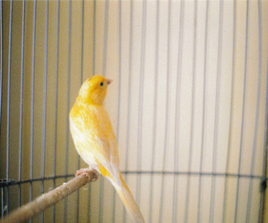 bird, yellow, and photography image