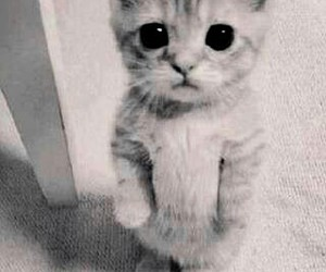 lovely and cat b&w cute image
