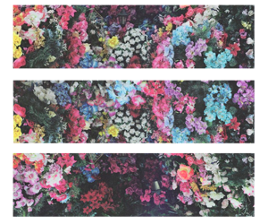 flowers, colors, and wallpaper image