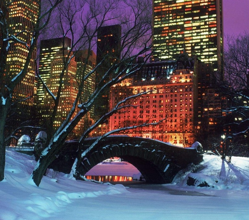 Central Park, christmas, and nyc image