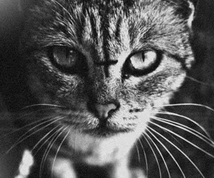 cat, cross, and black and white image