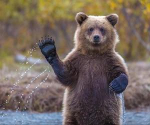 bear, animal, and hello image