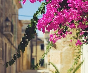 flowers and Greece image