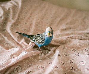 bird, blue, and vintage image