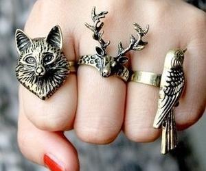 rings, animal, and bird image