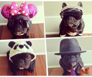 dog and bulldog frances image