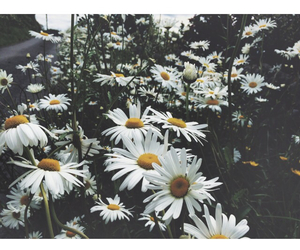 daisies, flowers, and grunge image