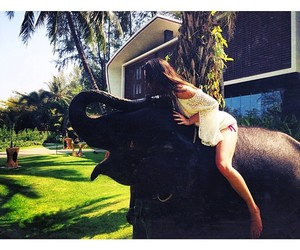 kendall jenner and elephant image
